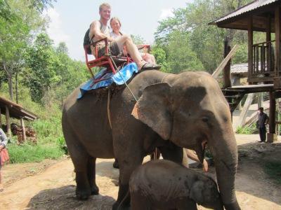 Elephnat trek Thailand